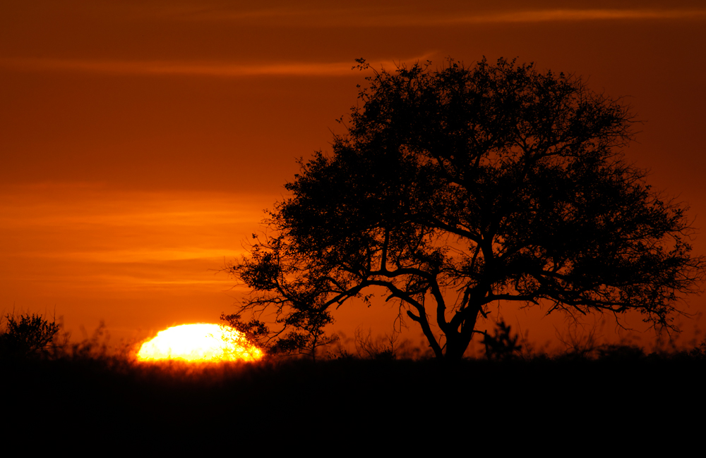 Sunrise at Sabi Sands - Stock Image